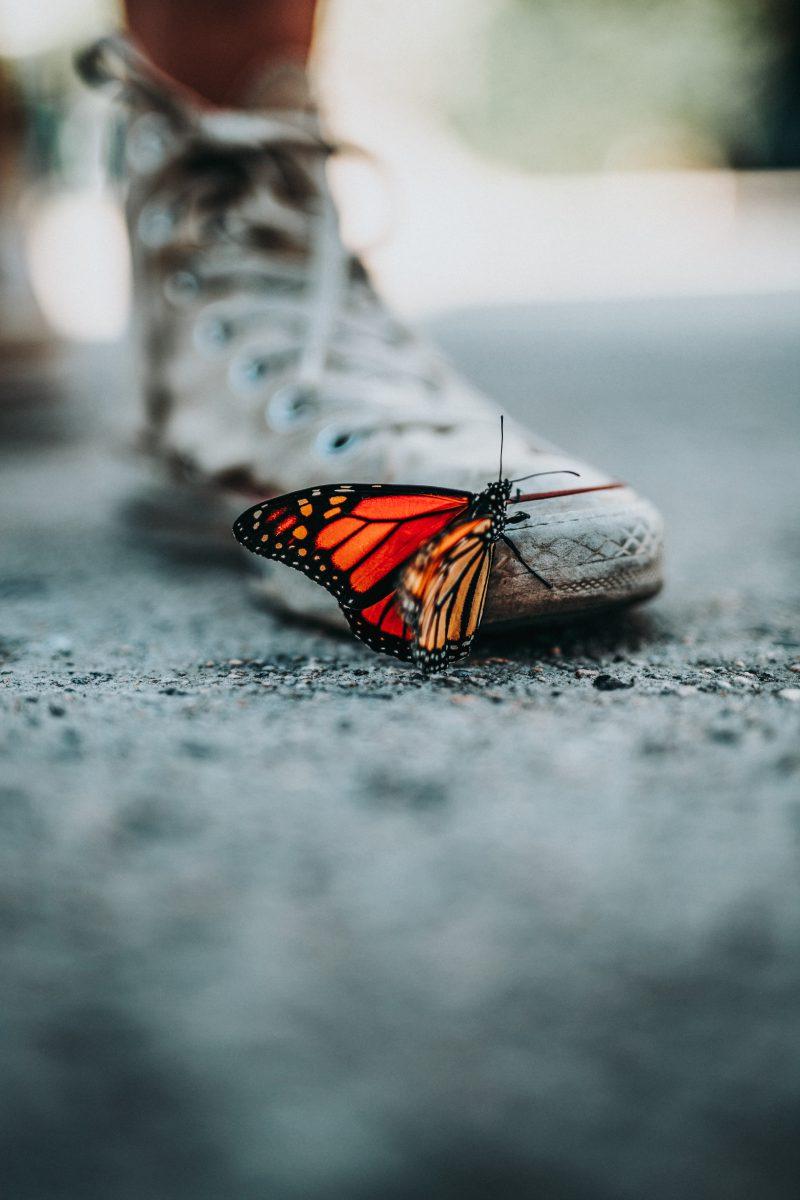 Schmetterling auf einer schmutzigen Straße klettert an einem Turnschuh hoch. Man sieht den nackten Unterschenkel und ein wenig von dem zweiten Schuh.