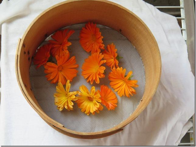 Köpfe von Ringelblumen auf einem Tuch auf einem Bachrost, drumherum ein Holzrahmen